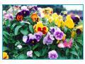 camp cu flori